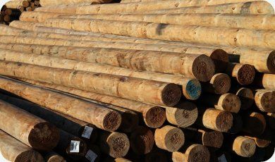 SED Timber Poles | Construction Timber Poles